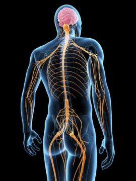 坐骨神経痛 完治 神経の流れ